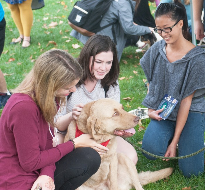 """Students pet a therapy dog at the """"Paws to Relax"""" event, hosted by the McDonald Center for Well-Being. The dogs are part of Therapy Dogs International, a nonprofit."""